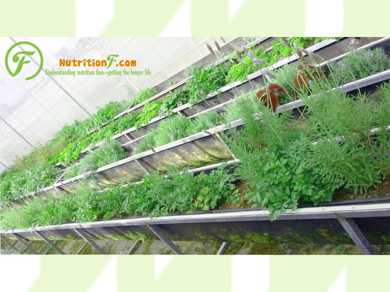Garden herbs help to contribute the wonderful dishes