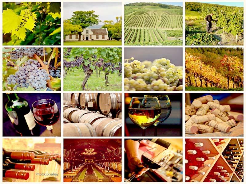 Wine passionate